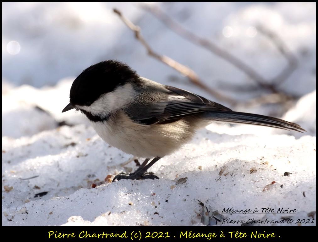 Parc Nature de la Pointe aux Prairies .Secteur du Fleuve . Mzosan82