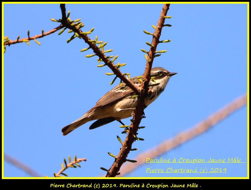 Mercredi , 22 Mai Jardin Botanique . Paruli52