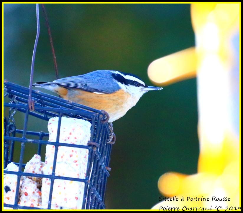 Vendredi Apres-midi au Jardin Botanique Sittel29