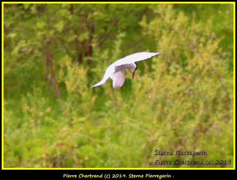 Dimanche 26 Mai ,Anjou sur le Lac , Anjou . Sterne10