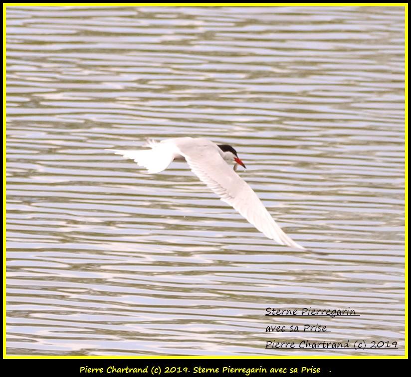Dimanche 26 Mai ,Anjou sur le Lac , Anjou . Sterne11