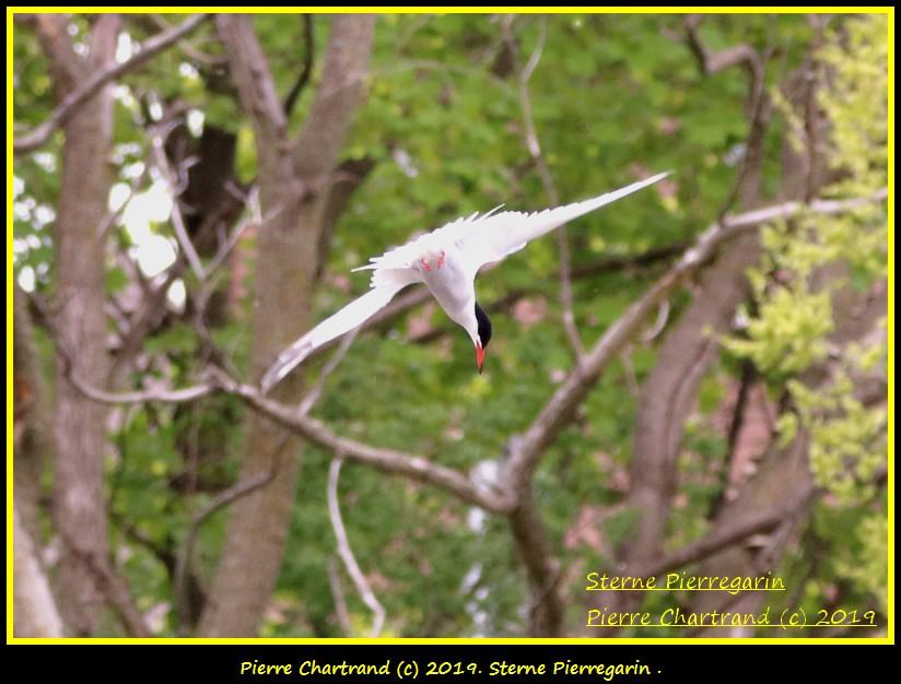 Dimanche 26 Mai ,Anjou sur le Lac , Anjou . Sterne12