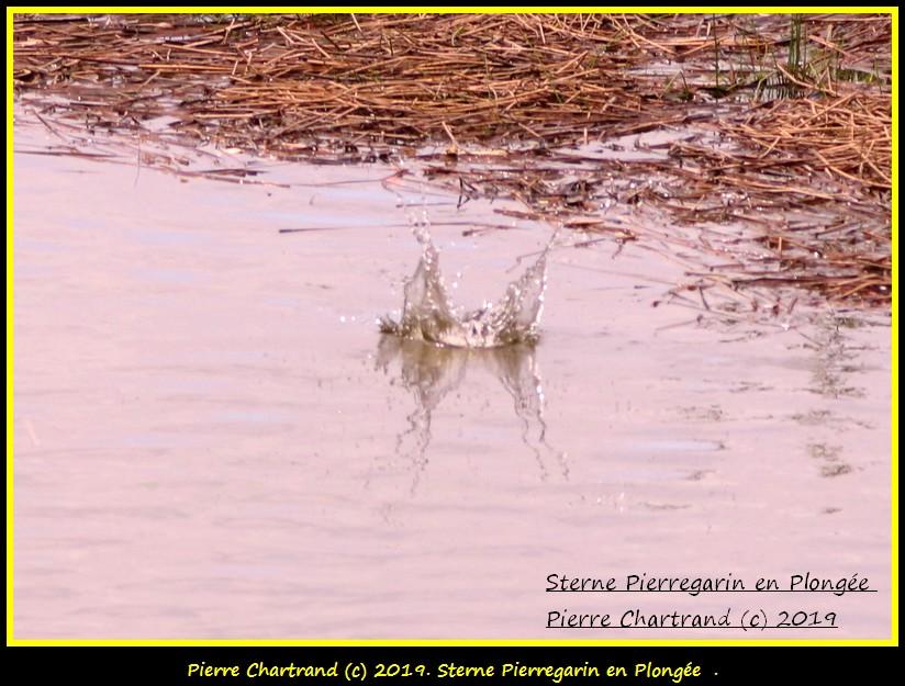 Dimanche 26 Mai ,Anjou sur le Lac , Anjou . Sterne13