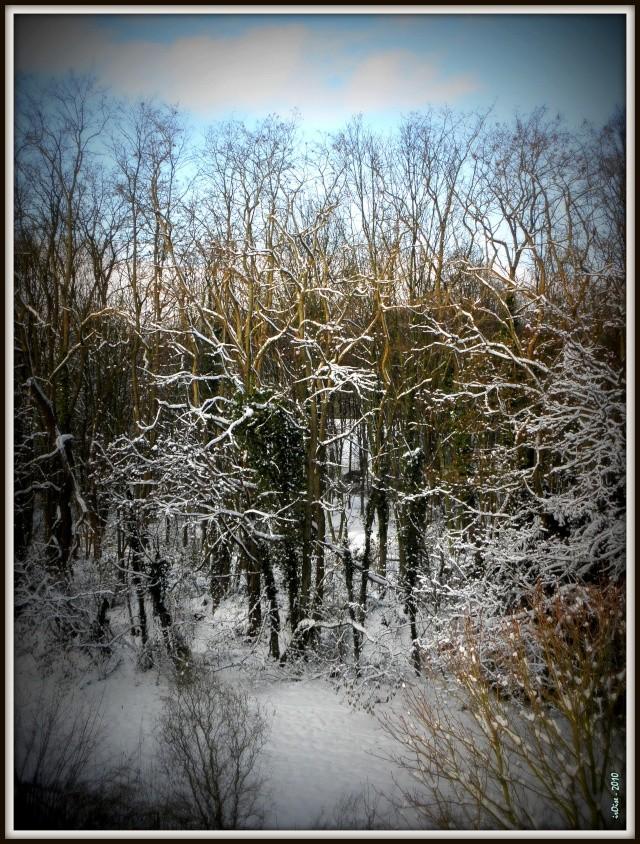 Paysages sous la neige - Page 2 Noal_210