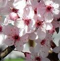 La nature s'éveille Fleurs11