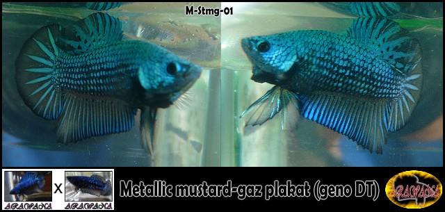 F3 DTPK mustard gaz metalliques, les photos M_stmg11
