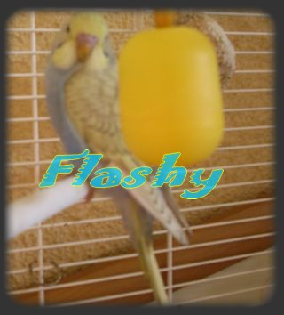 flashy Photo_11