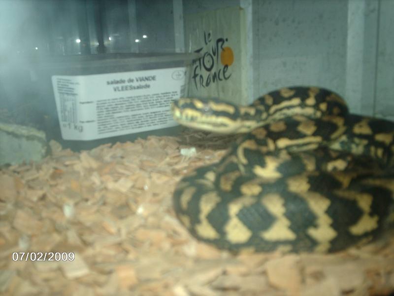 mes 2 python a moi Imag0012