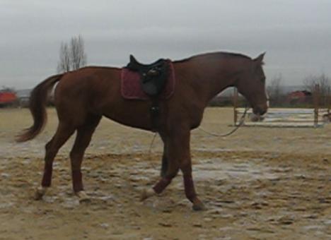 Longer son cheval Bordea10