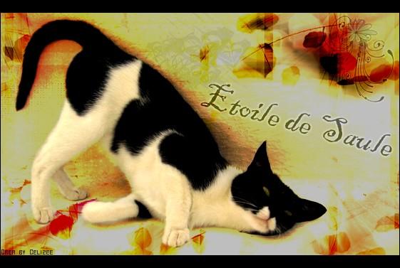 «{ BY Célizée © Etoile10