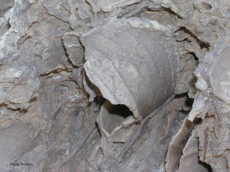 Macro Fossil14