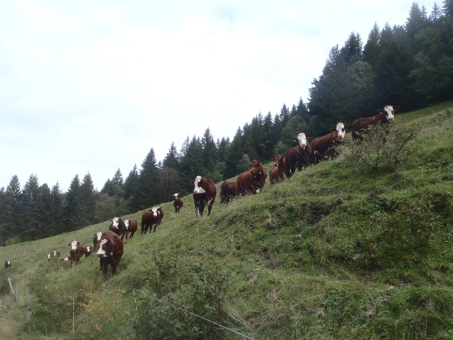 Fermeture en Savoie Pa060061