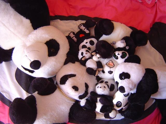 Tao & Mao (AE Panda & Pipos Ringo) Tao le retour (p.5) - Page 2 Dsc04114