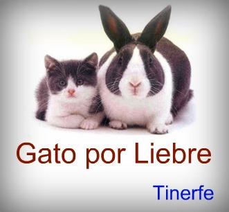 Gato por Liebre