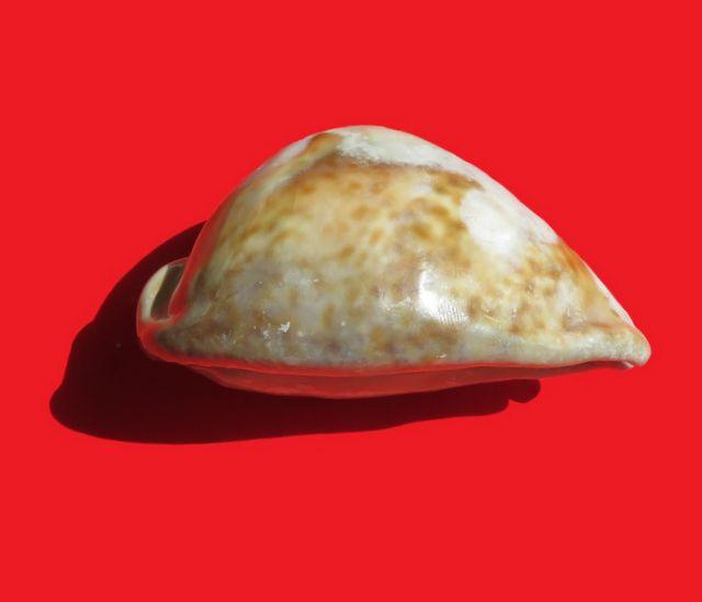 Trona Stercoraria très spéciale Tronst12