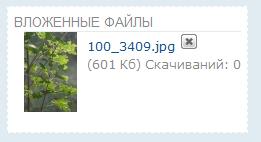 Вложенные файлы Image_11