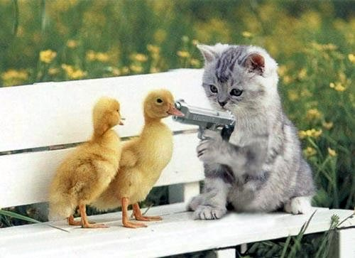 IT'S ALL ABOUT THE DUCKS - Page 3 Cat_du10