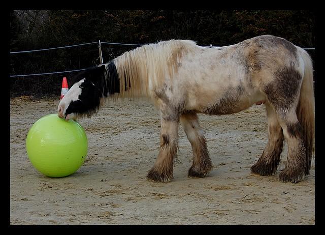 Boing boing...Kaiser et sa gym' ou le futur footballeur Ballon16