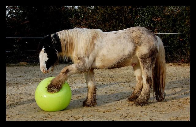 Boing boing...Kaiser et sa gym' ou le futur footballeur Ballon19