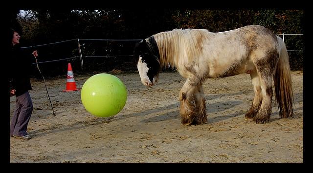 Boing boing...Kaiser et sa gym' ou le futur footballeur Ballon20