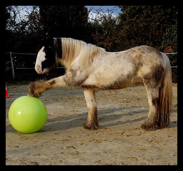 Boing boing...Kaiser et sa gym' ou le futur footballeur Ballon21