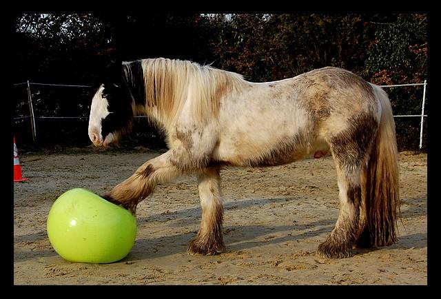 Boing boing...Kaiser et sa gym' ou le futur footballeur Ballon22
