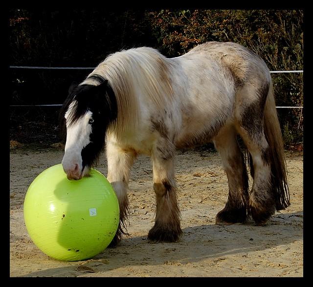 Boing boing...Kaiser et sa gym' ou le futur footballeur Ballon30