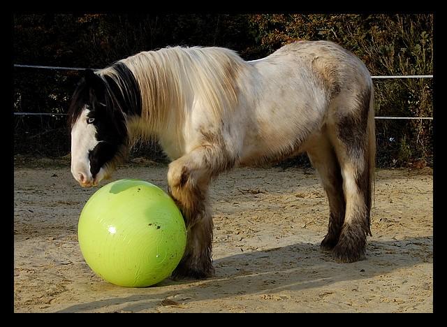 Boing boing...Kaiser et sa gym' ou le futur footballeur Ballon31