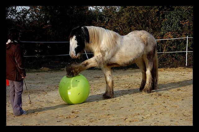 Boing boing...Kaiser et sa gym' ou le futur footballeur Ballon32
