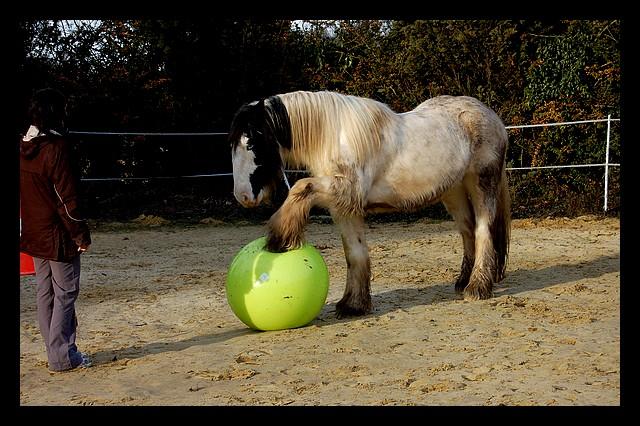 Boing boing...Kaiser et sa gym' ou le futur footballeur Ballon33