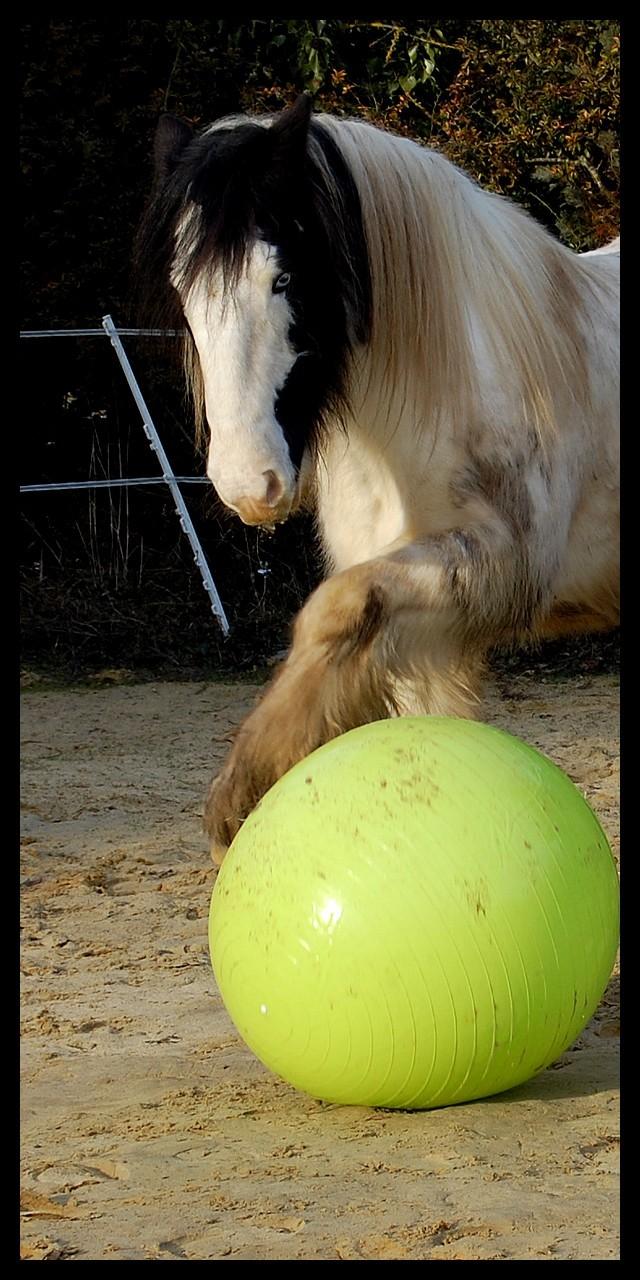 Boing boing...Kaiser et sa gym' ou le futur footballeur Ballon35