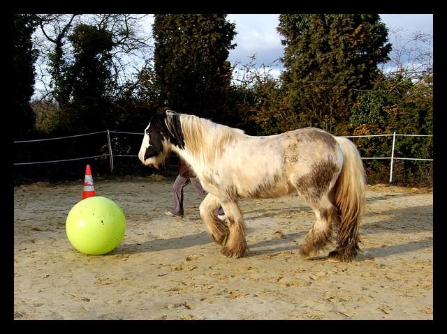 Boing boing...Kaiser et sa gym' ou le futur footballeur Ballon37