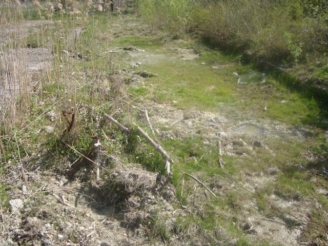 Herping : Lissotriton helveticus Photo_55