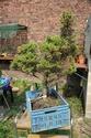 Rempotage et projet Picea abies 14-04-10