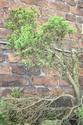 Rempotage et projet Picea abies 15-04-16