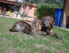 Urgence pour 6 chiens (association Corse du Sud) _wsb_211