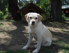 Urgence pour 6 chiens (association Corse du Sud) _wsb_215