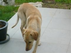 Urgence pour 6 chiens (association Corse du Sud) _wsb_217