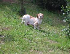 Urgence pour 6 chiens (association Corse du Sud) _wsb_218