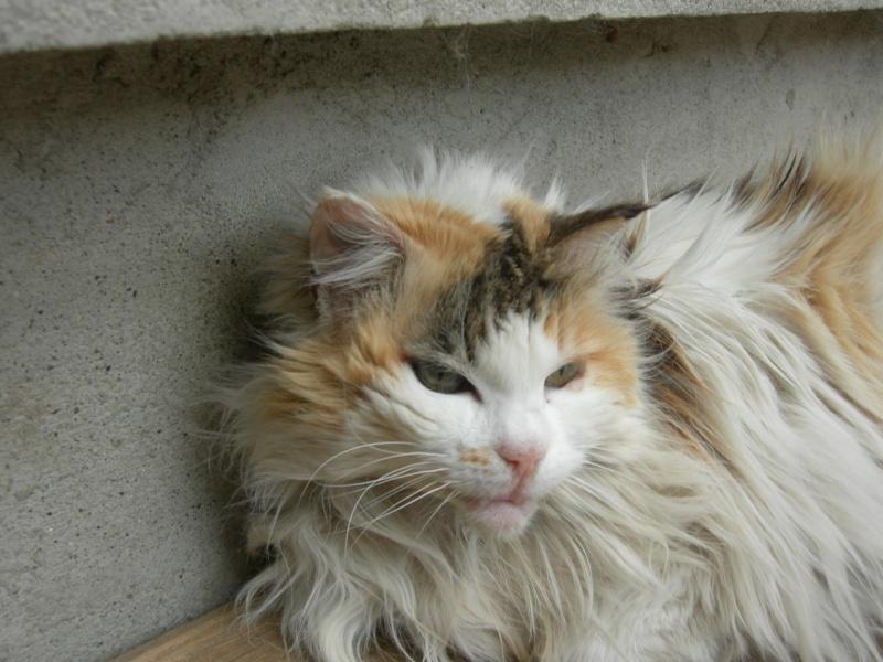 Clarisse, 16 ans Dscn3010