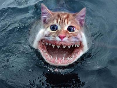 poissons chats en vendée Articl10