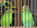 Les masque jaunes Img_1810