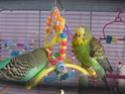 JEUX et LIEUX FAVORIS de nos oiseaux Img_2810