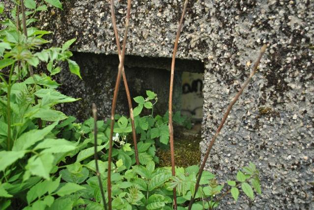 Maginot: blockhaus pour 25mm AC Fermon15