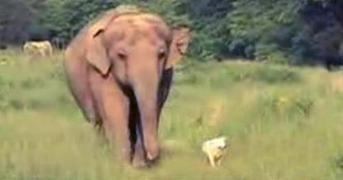 Amitié particulière Elepha10