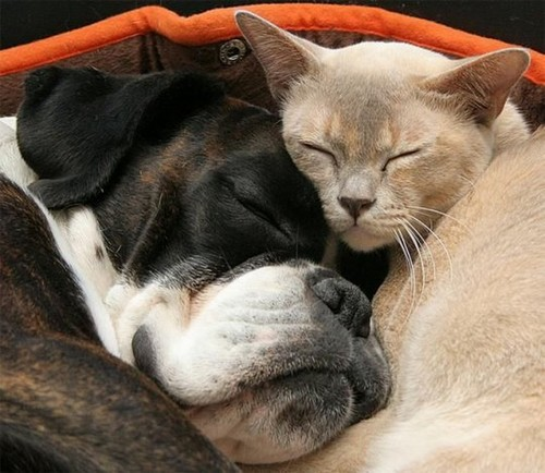 Chiens et chats Sieste11