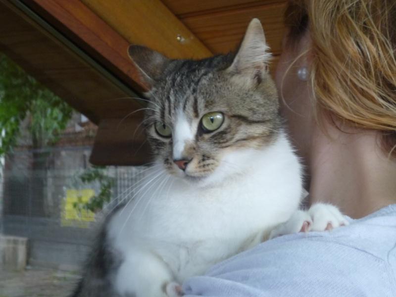 Esperanza Felina y los Gatos callejeros P1010627