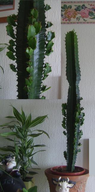 Voilà ma petite collection... Cactus10