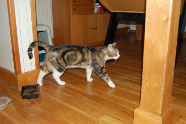 Spyke, 2 ans, recherche FA ou adoptant (urgent) Spike210