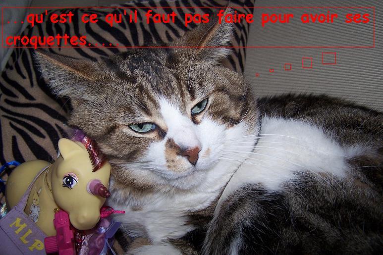 l'histoire de Dora chez les petits malins Photo_66